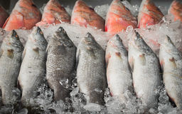 Frozen white and red snapper Stock Photography