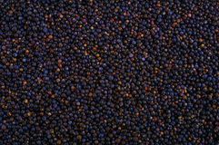 Frozen wild blueberries in crates texture - background Royalty Free Stock Images
