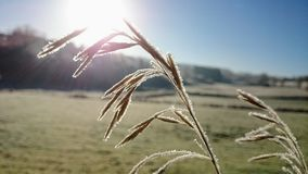 Frozen wild gras stock photos