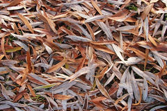 Frozen willow leaves Royalty Free Stock Images