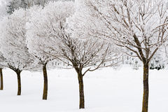 Frozen willow trees Royalty Free Stock Image