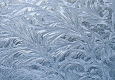 Frozen window. An ornament of frost on a window royalty free stock image