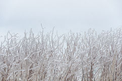 Frozen winter background Royalty Free Stock Photos