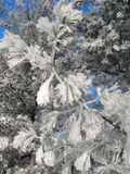 Frozen winter branches Royalty Free Stock Photo