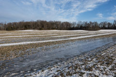 Frozen winter cornfield Stock Photo