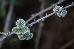Frozen winter Royalty Free Stock Photos