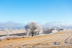Frozen winter field Royalty Free Stock Images
