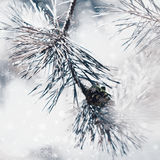 Frozen winter  fir tree or pine branch with bokeh, Christmas bac Stock Photo