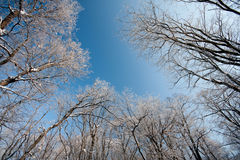 Frozen winter forest Stock Photos