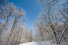 Frozen winter forest Royalty Free Stock Image