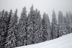 Frozen winter forest in fog and snow slope for freeride at winte Stock Photos