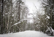 Frozen winter forest road in snow in Russia Stock Images