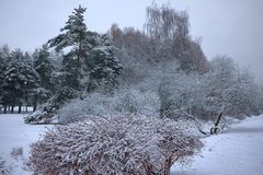Frozen winter forest and shrubs with snow covered trees. royalty free stock photography