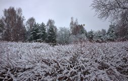 Colorful Frozen winter forest and shrubs with snow covered trees. stock images
