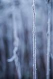 Frozen winter Royalty Free Stock Photography