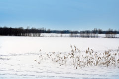 Frozen winter lake covered by snow Stock Photos