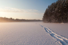 The frozen winter lake in wood under snow Royalty Free Stock Image
