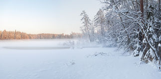 The frozen winter lake in wood under snow Stock Image