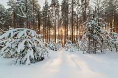 The frozen winter lake in wood under snow Royalty Free Stock Photos