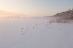 The frozen winter lake in wood under snow. Royalty Free Stock Images