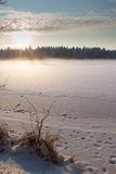 The frozen winter lake in wood under snow Stock Photos
