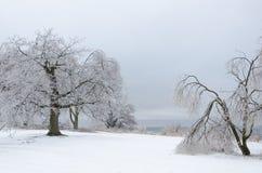 Frozen winter landscape Stock Images
