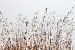Frozen Winter Landscape in sichuan,China royalty free stock photos