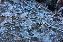 Frozen winter leafs as background Royalty Free Stock Images