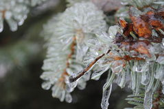 Frozen Winter stock photos