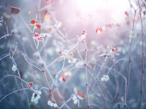 Frozen winter nature background stock images
