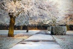 Frozen winter park. Winter scenery of Limerick city park Royalty Free Stock Photography