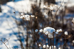 Frozen winter plant Stock Images