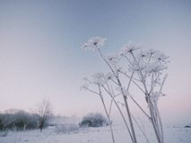 Frozen winter plant Royalty Free Stock Photography