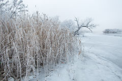 Frozen winter river and trees in the morning Stock Images
