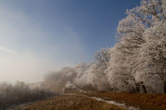Frozen. Winter scene with a frozen forest as the fog is lifting away Stock Image