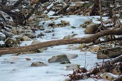 Frozen winter stream in the woods. With log and rocks Stock Image