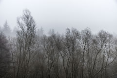 Frozen winter trees in forest the fog foggy day Stock Image