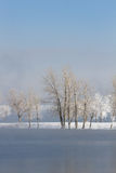 Frozen Winter Trees Landscape. With a lake in the foreground stock photography