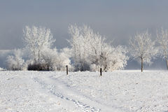 Frozen Winter Trees Landscape. Frozen Winter landscape with a snow trail leading into the icey trees stock images