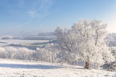 Frozen  withe snow winter magic Landscape season Nature Royalty Free Stock Photos
