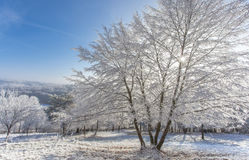 Frozen  withe snow winter magic Landscape season Nature Royalty Free Stock Photography