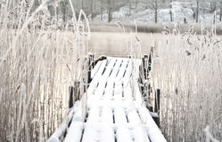 Frozen wooden bridge. Surrounded by frozen reed Royalty Free Stock Photography