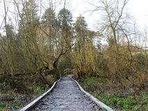 Frozen wooden pathway leading to bridge over the River Chess, Chorleywood royalty free stock photos