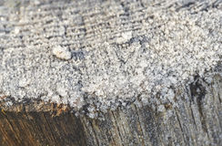 Frozen wooden trunk macro detail on a winter morning Royalty Free Stock Image