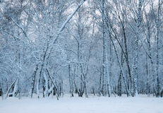 Frozen woods Royalty Free Stock Photos