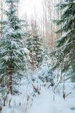 Frozen woods under snow Stock Photos