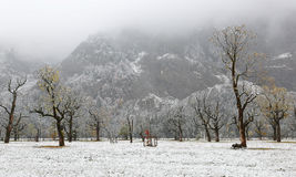 Frozen world~ Snow covered maple trees standing on the meadow by the mountainside in a foggy gloomy morning ~ Stock Photos