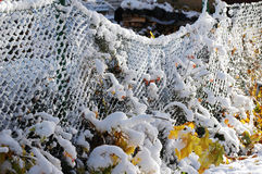 Frozen yard Stock Photos