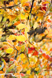 Frozen yellow, red, orange leaves in sunny autumn Royalty Free Stock Photos