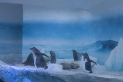 Frozen zone of aquarium, icy landscape, where you can view penguins at play.